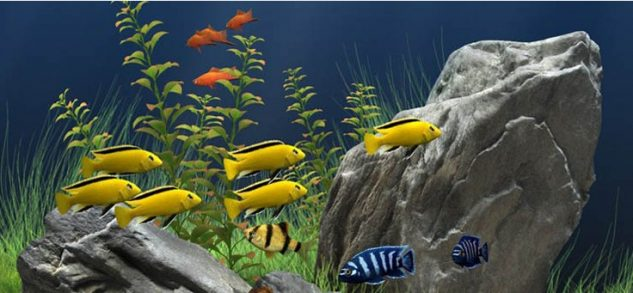Foto Ikan Hias