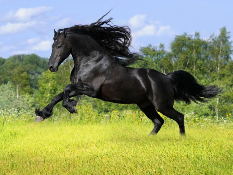 Kumpulan Foto Kuda Ini Keren Banget Ragam Informasi